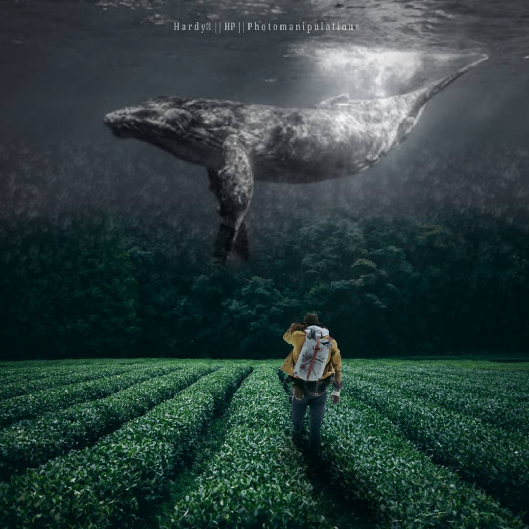 07-A-whale-in-a-field-Hardiyanto-Indra-Setyawan-Words-Viewed-from-the-Mind-of-the-Photographer-www-designstack-co