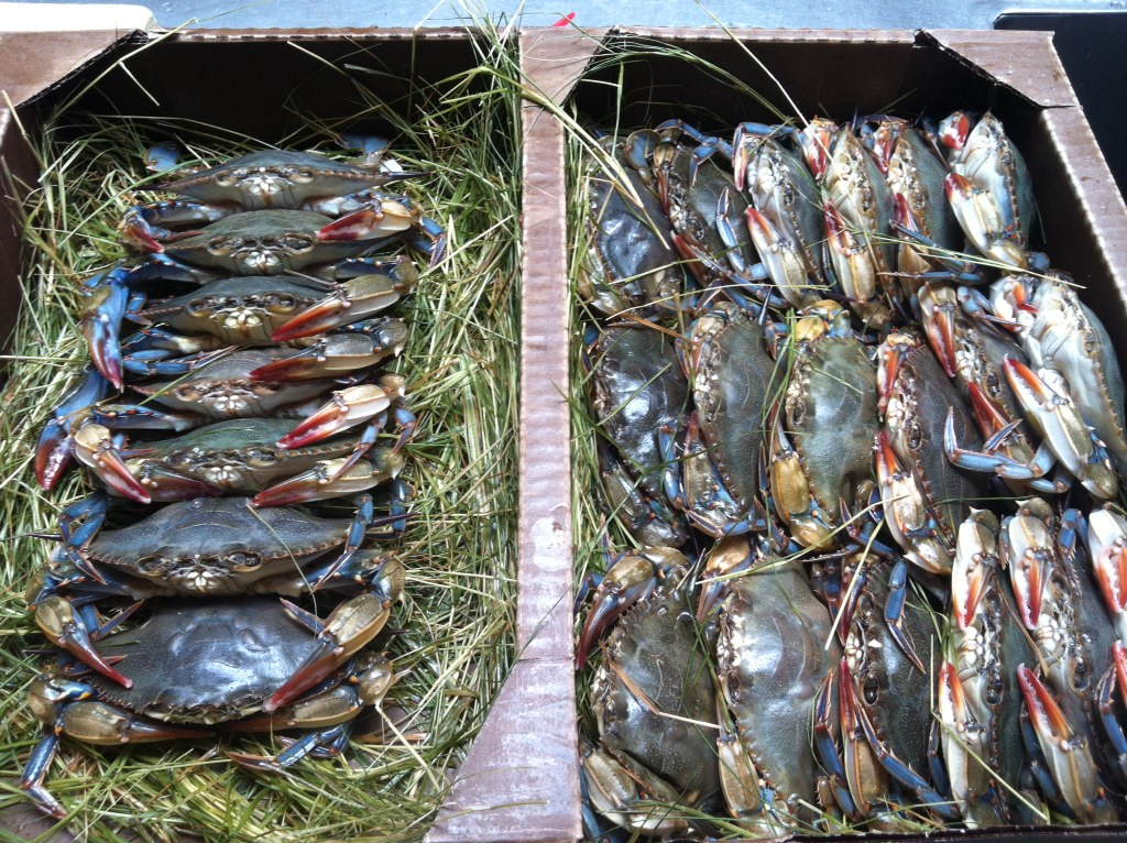 Frozen Soft Shell Crab Wholesale - Soft Shell Crab Supplier, Soft