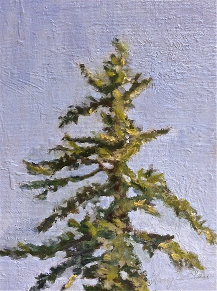 Fir Study © Nancy Van Blaricom