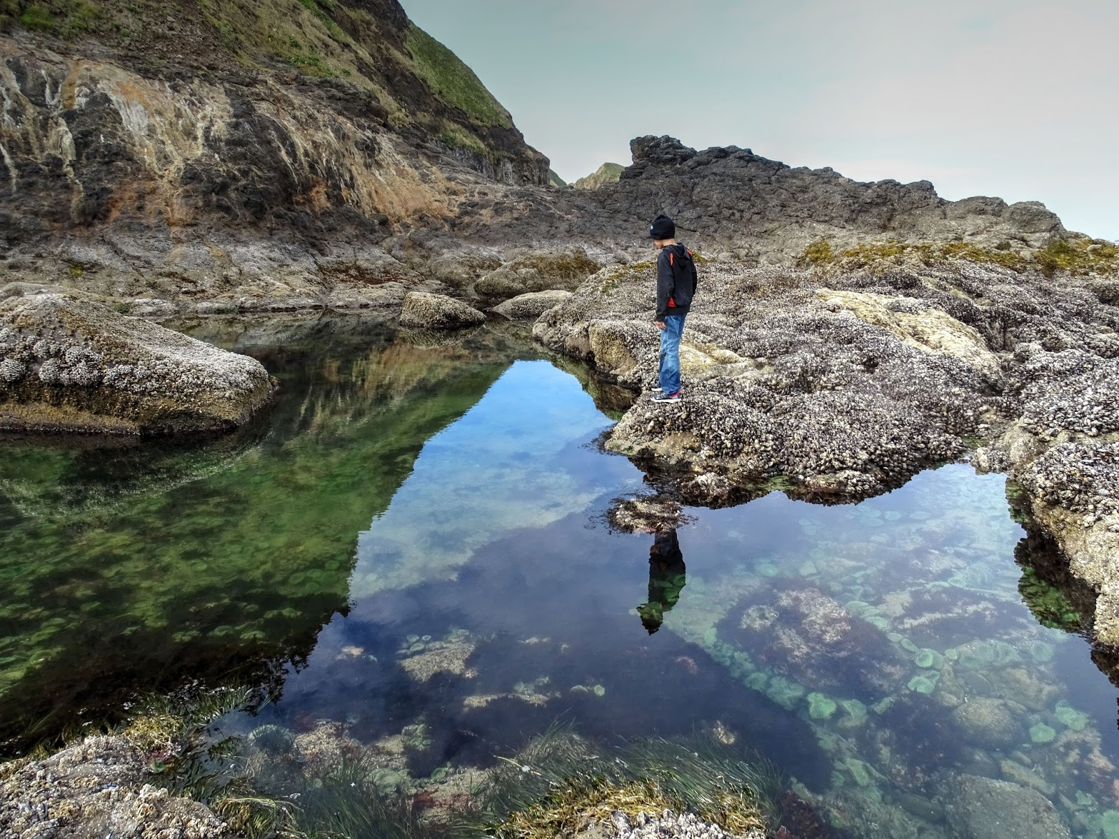 This Is The Largest Tide Pool We Found During Our Lost Boy Adventure It S Located On Rocks Between Short Beach And Cave
