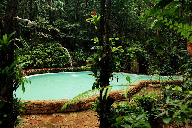 Bosque das Samambaias promove I Mostra Cultural e Terapêutica