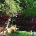 (Video) Terjun Masuk Kandang Nak Bersalam Dengan Singa