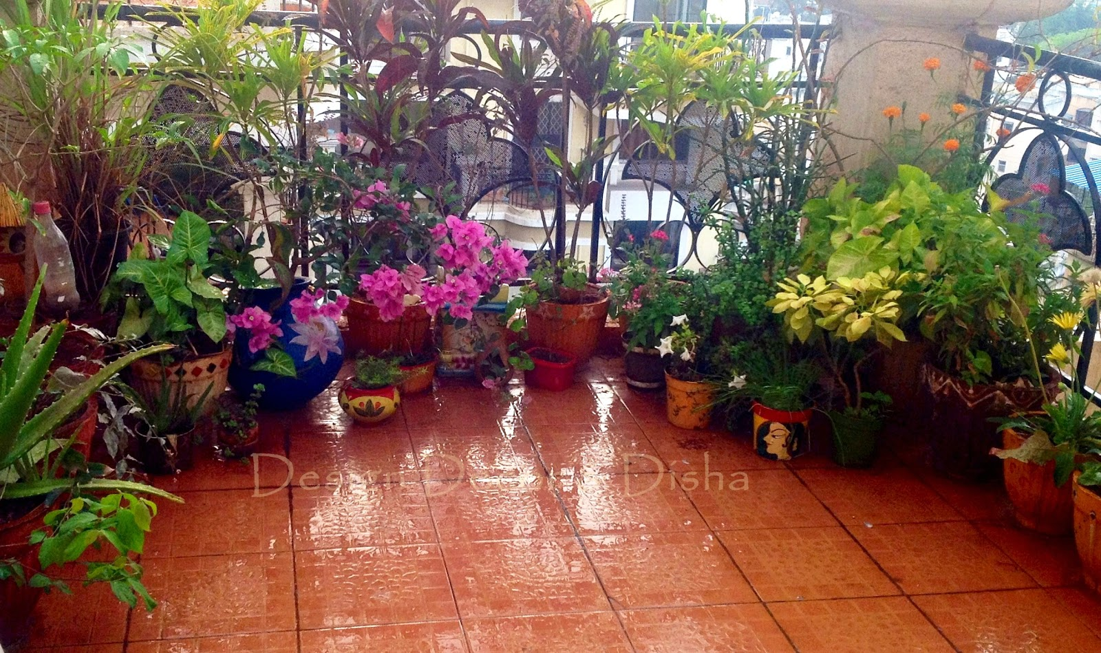 Design Decor & Disha My Balcony Garden Makeover