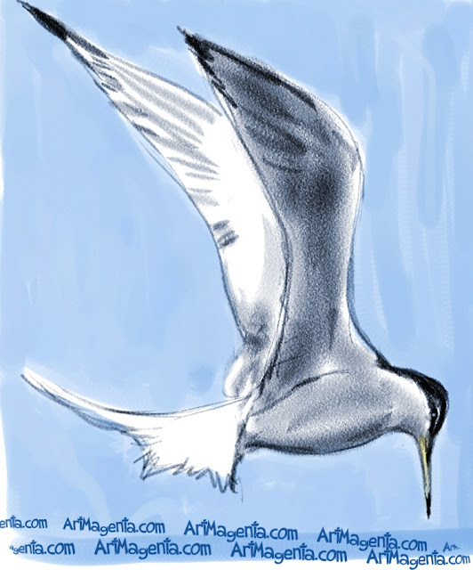 Little Tern sketch painting. Bird art drawing by illustrator Artmagenta