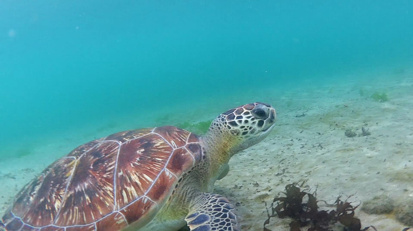 martinique caraibes vacances île dom tom visite anse dufour tortue plage snorkeling masque tuba turtle