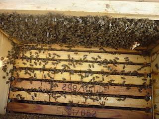Πυροσφραγίστε και τα πλαίσια των μελισσιών σας