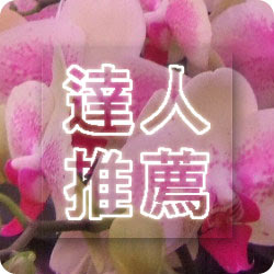 達人推薦蝴蝶蘭