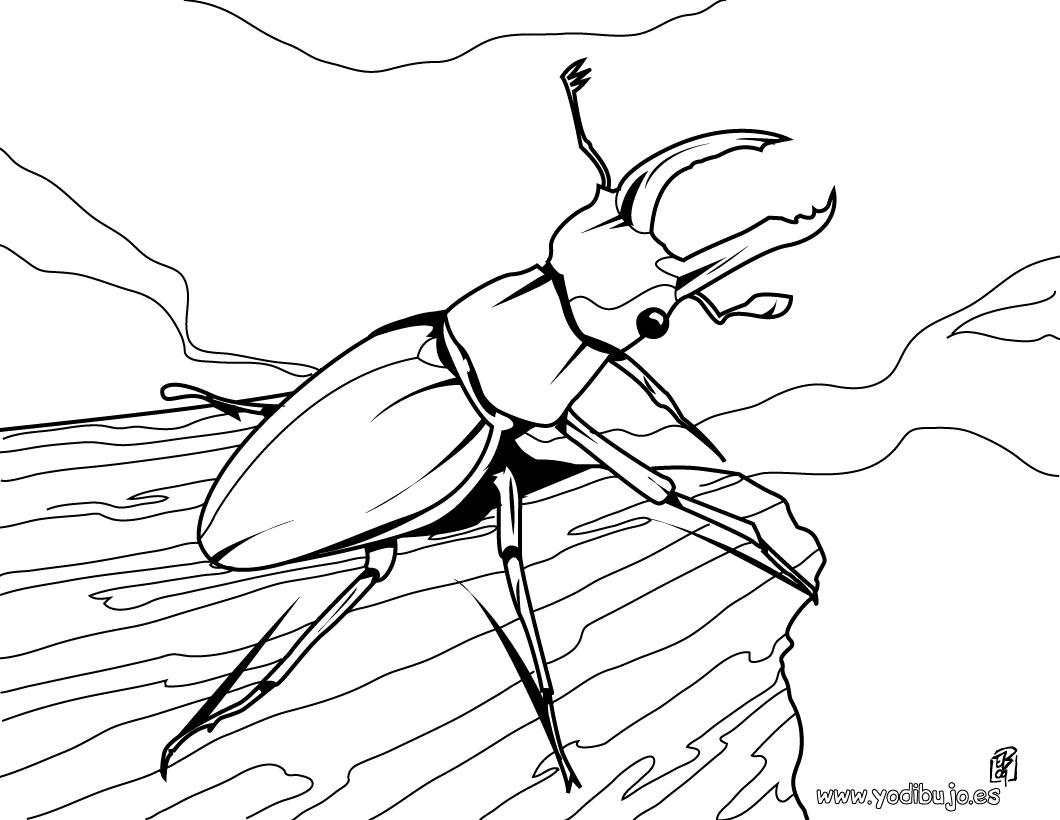 Dibujos De Insectos Para Colorear: Pulgón: Dibujos De Bichos Para Colorear