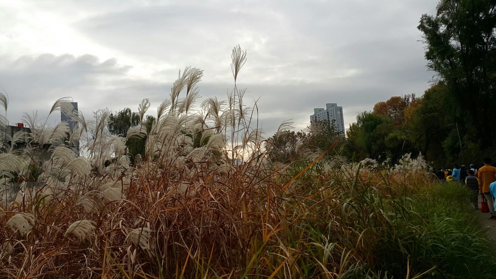 Sights of soft reeds