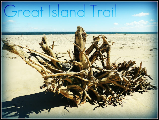 Great Island Trail: Playa