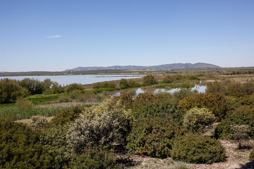 Laguna de Fuente with flamingos