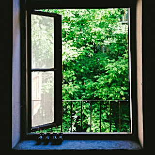 open window with sill looking outside at trees from inside