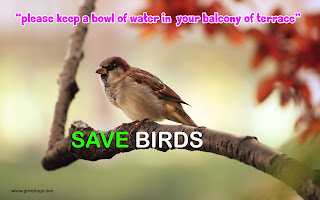 save birds image with message of provide water for birds in SUMMER