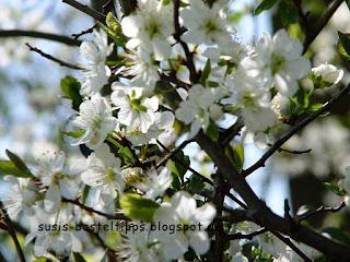 Kirschblüten, Foto von unabhängiger Stampin' Up! Demonstratorin in Coburg