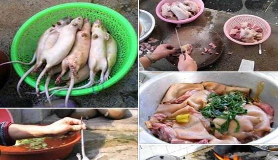 KENALI SEBELUM TERLAMBAT!! WASPADALAH, Tikus Menjadi Ayam Tiruan, Begini Cara Mengenalinya