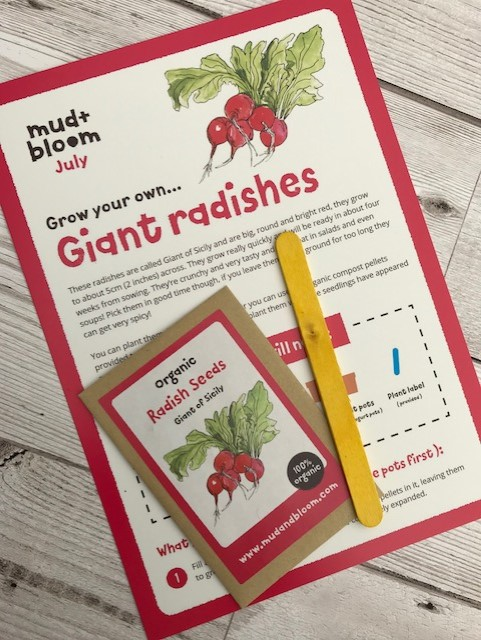 Giant radishes seeds and leaflet, with stick marker