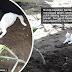 Sayangnya kucing putih ini pada arwah Tokwan