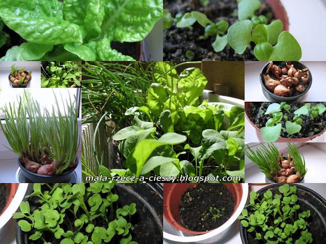 Warzywa i zioła również na balkonie - czerwiec 2012