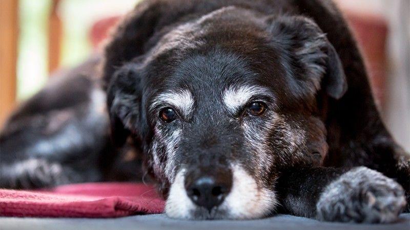 Σωστή άσκηση για τον ηλικιωμένο σκύλο μου