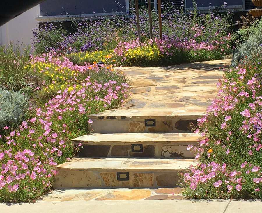 Edeenut Creates Drought Tolerant Front Yards And Plants For Desert