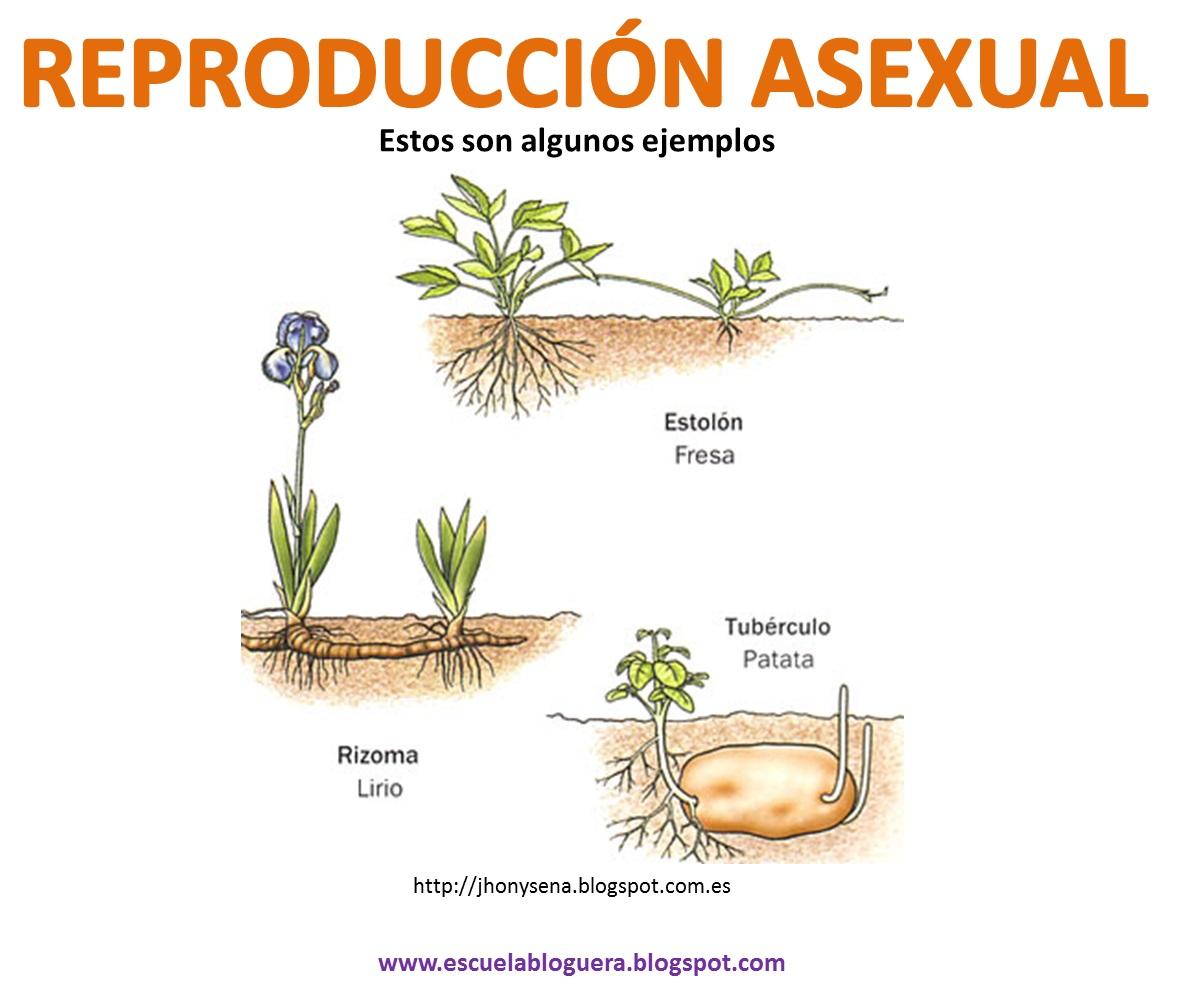 Reproduccion asexual de las plantas pdf