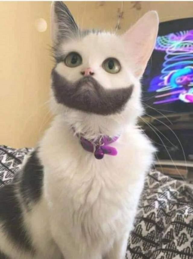 Funny cats - part 279, best cute cat image, best funny cat