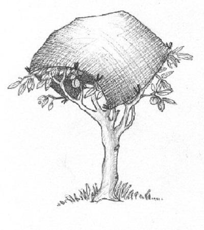 Netting | Fruit trees