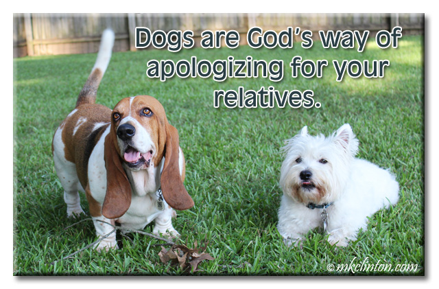 Dogs are God's way of apologizing for your relatives. Bentley Basset Hound & Pierre Westie