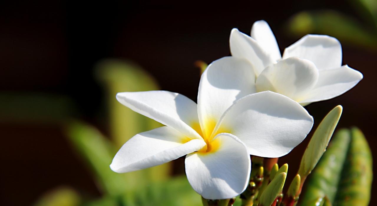met foto bloem identificeren