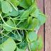 ΚΑΙ ΟΜΩΣ ΔΕΝ ΤΟ ΤΡΩΕΙ ΚΑΝΕΙΣ! Το λαχανικό που ρίχνει πίεση, χοληστερίνη και προστατεύει από τον καρκίνο
