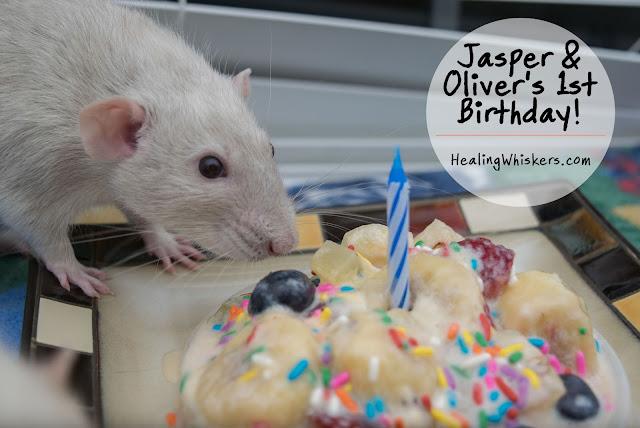 Jasper & Oliver's 1st Birthday!