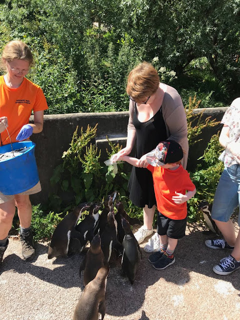 Mum and son feeding penguins with zookeeper  watching
