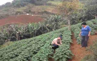 Resultado de imagen para estado Vargas zona agricolas