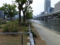 【大阪市北区】中之島公園のバラ園 堂島川(北側)