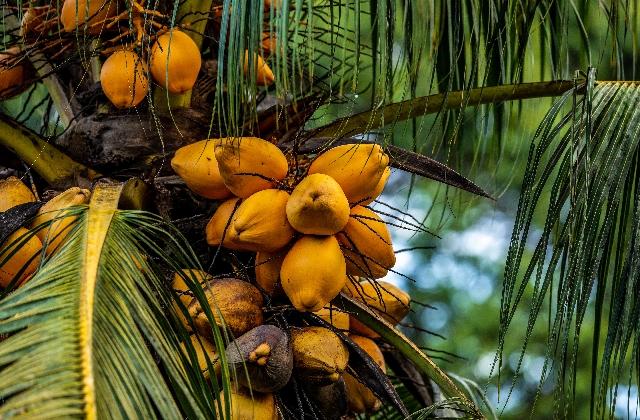 Coconut Benefits