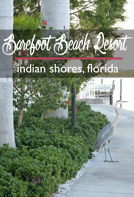 Barefoot Beach Resort, Indian Shores, Florida: A Review | CosmosMariners.com