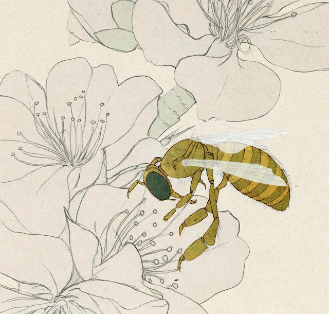 apicultura, abeja, polinizacion, dibujo
