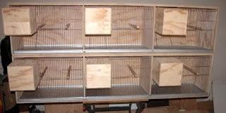 Cara Membuat Kandang (Sangkar) Burung Lovebird dengan Mudah