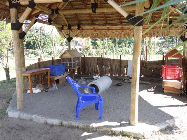 Istana kelinci di Kampung Anggrek