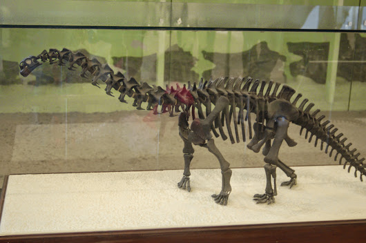 The American Museum Brontosaur - A History In Pictures