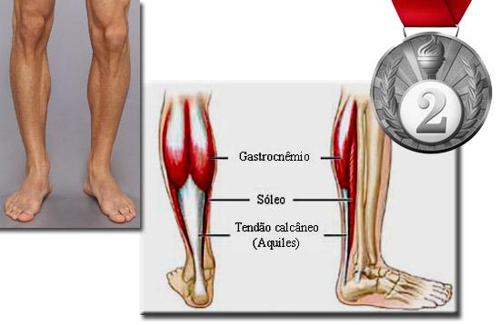 Quais são os músculos mais fortes do corpo humano - E qual é o mais fraco - 2 lugar Sóleo e gastrocnêmios