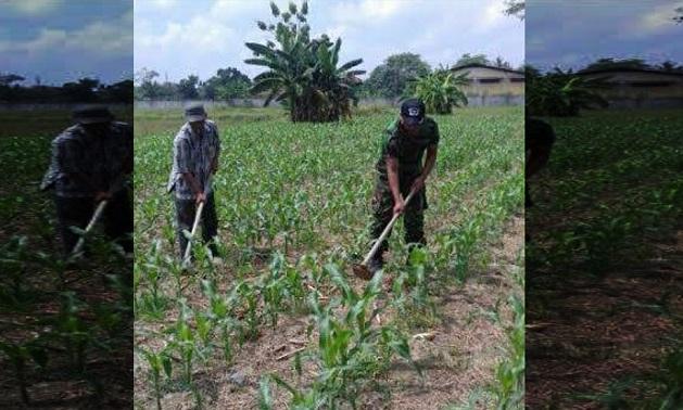 Babinsa Koramil 19 / Bangun Purba dan Petani Membersihkan Lahan Jagung