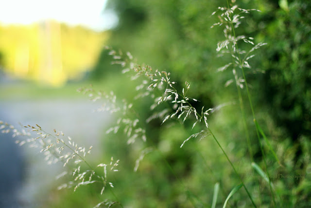 grass by the road