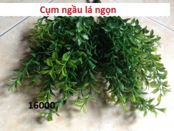 Phu kien hoa pha le tai Xuan Phuong