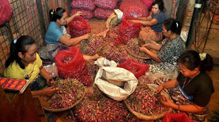 jual bawang merah murah di jawa tengah , sumatera,sulawesi,kalimantan,nusa tenggara