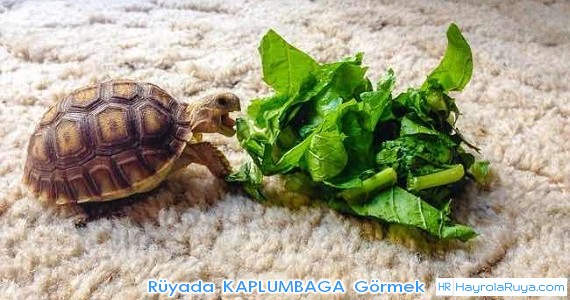 Rüyada Kaplumbağanın Görülmesi