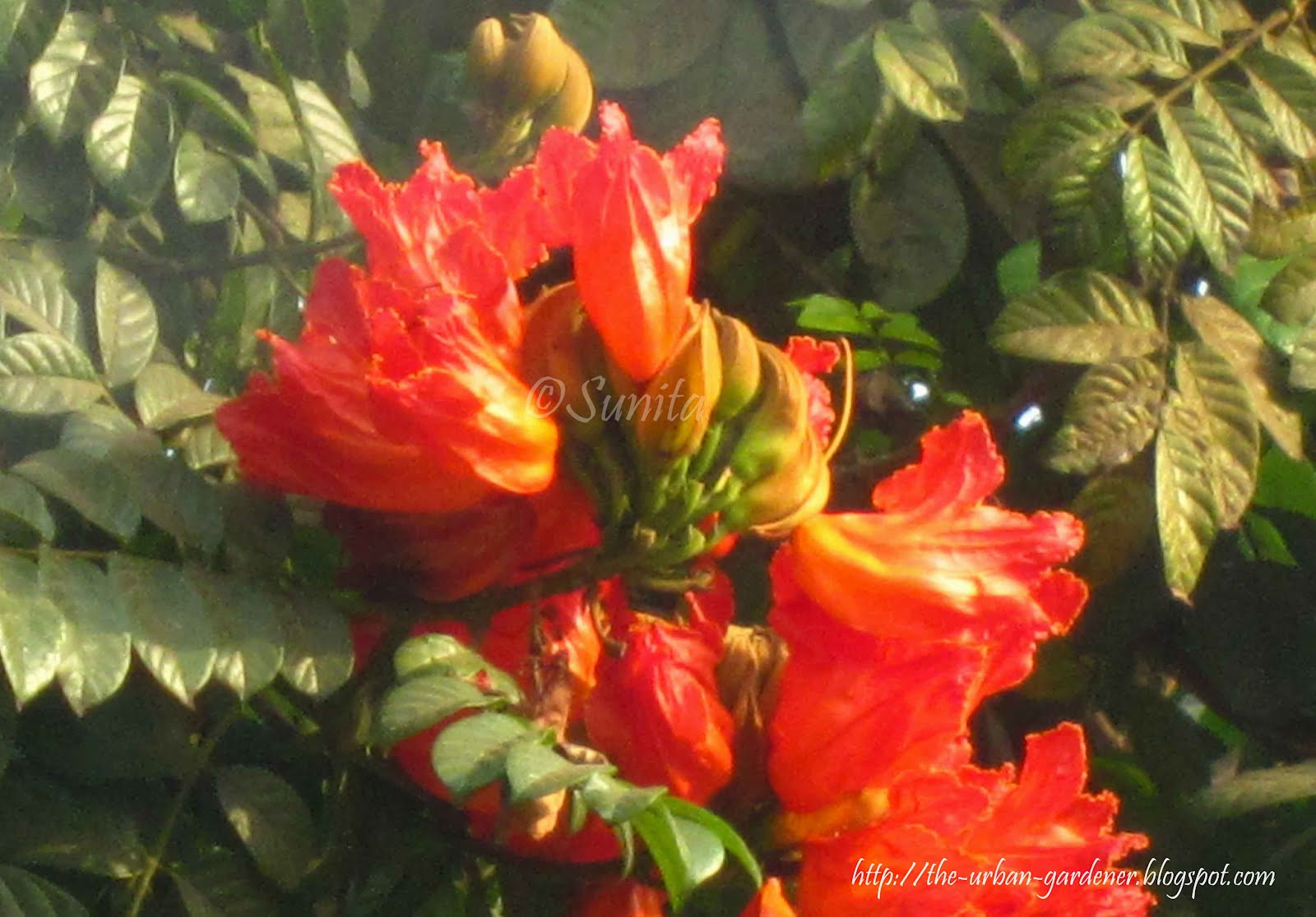 Names of flowers in hindi flowers names in sanskrit ideas cool flowers of india with hindi names the most beautiful flower izmirmasajfo Images