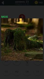 Темный лес, стоит трухлявый пень покрытый весь мхом
