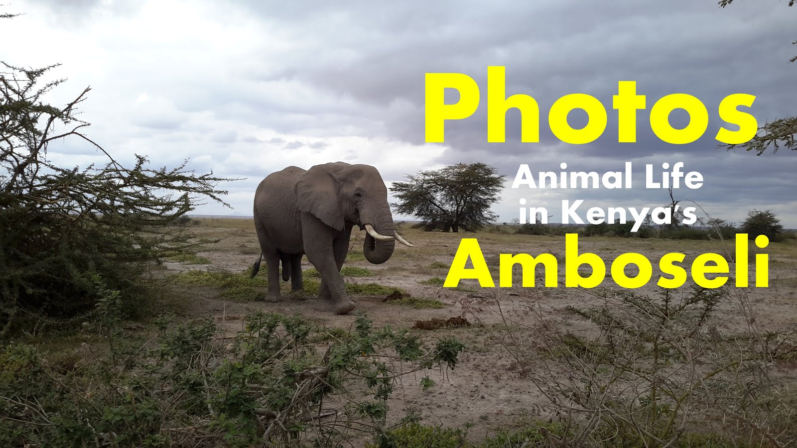 Amboseli National Park animal life in Phots by @Tambula_Africa | Shared Via T-Tours and Travel