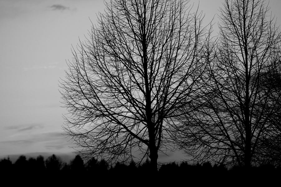 Blog + Fotografie by it's me! - #FiveDayBlackandWhiteChallenge - Sonnenuntergang über Wald und Feldern
